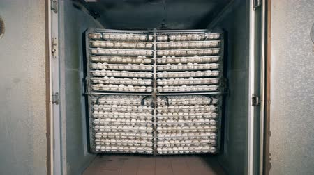 collected : Set of collected eggs kept in a battery farm