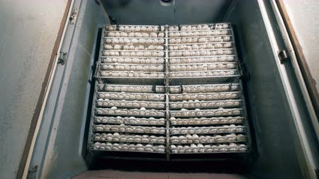 proteína : Lots of eggs in cages. Fowl eggs are in cages, packed in rows.