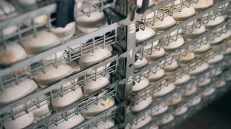 törékeny : Many cages with eggs at a farm in incubator. Stock mozgókép