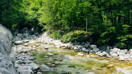 oběh : Forest landscape with a running stream, mountain river and rocks.
