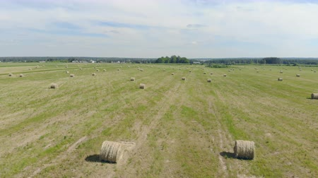 тюк : Hayricks laying on a field, top view. Стоковые видеозаписи