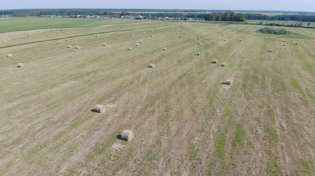palheiro : Harvested hay on a green field, top view. Vídeos