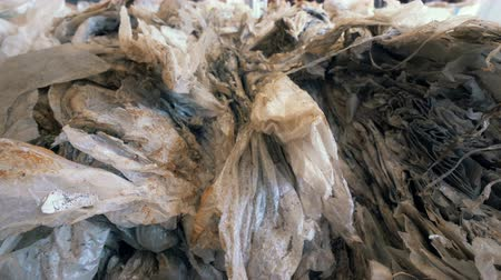 malom : Dirty cellulose, plastic, cellophane at a plant, close up.