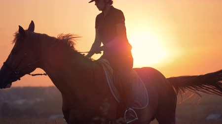 equipped : Female jockey is riding a brown horse during sunset Stock Footage