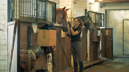 horse breeding : Young female equestrian is talking to a horse in the stables