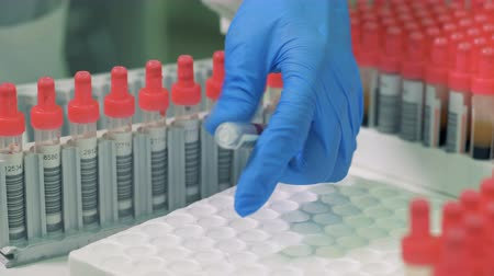 blood sample : Blood samples in tubes are getting checked and inserted into a palette Stock Footage