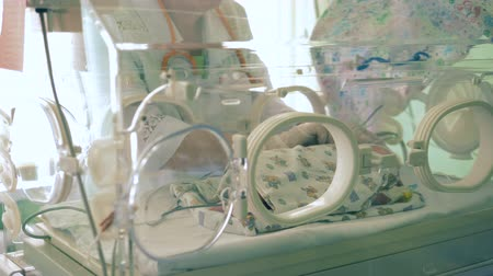reanimation : One nurse checks a baby in an incubator, close up. Stock Footage