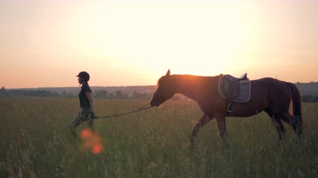 騎乗位 : Female rider leads a horse through a field, side view. 動画素材