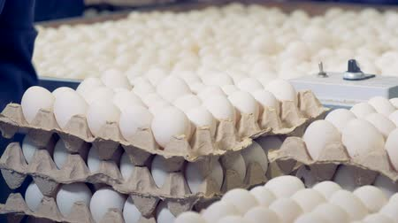 egg sorting : Carton boxes are getting filled with fresh eggs Stock Footage