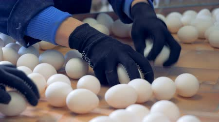 egg sorting : Henhouse worker is taking away some of the eggs on the tray. Poultry farm industrial production line.