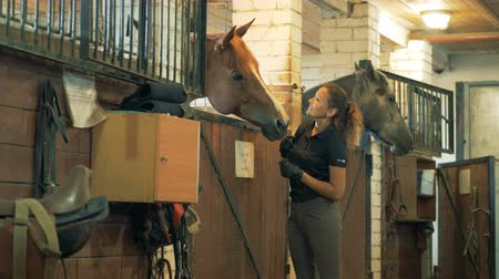 társ : Horsewoman smiles patting a brown horse in a stable.