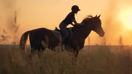 pat : Woman mounts a horse in the field, side view. Human and animal love concept. Stock Footage