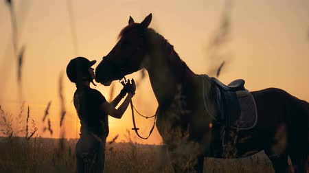 ranč : Rider checks a horse in a field, side view. Man and animal love concept.