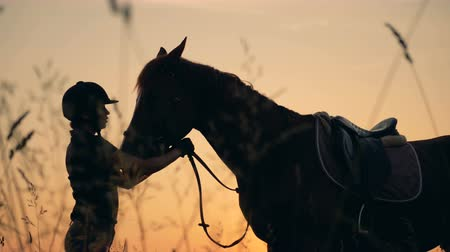 koňmo : Human and animal love concept. A rider and a horse on a sunset background, side view.