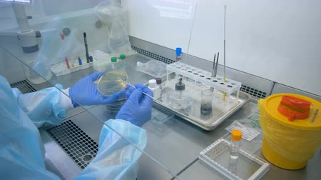 recipiente : Lab worker is burning a metal stick before using it for inspecting a sample Stock Footage