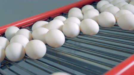 egg sorting : Eggs moving on a conveyor, close up.