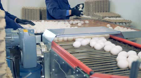 egg laying : People laying eggs on packagings, close up.