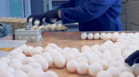 egg sorting : Process of eggs packing, close up.