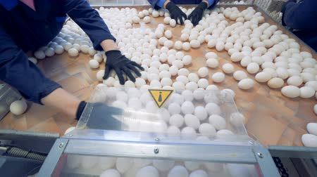 agraria : Eggs are sorted at a farm. People packing eggs into special boxes for sale at a poultry farm.
