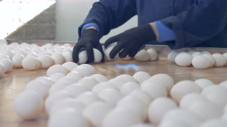 egg sorting : Poultry worker grabs eggs to pack them in boxes. 4K.