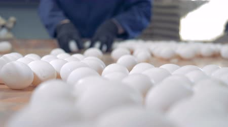 パック : Clean eggs sorted at a farm, close up. People working at a poultry farm, packing eggs. 動画素材