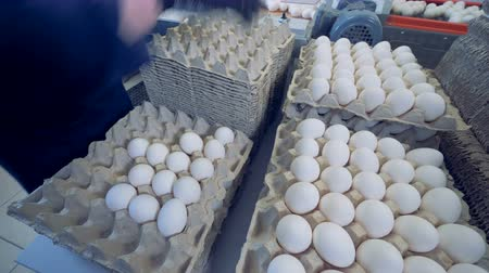 egg sorting : Farm worker puts eggs on a cardboard tray, stored in piles.