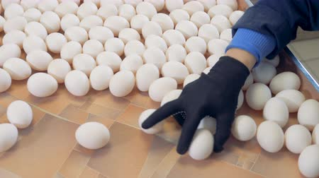sorted : Lots of eggs are sorted at a farm, top view. Stock Footage