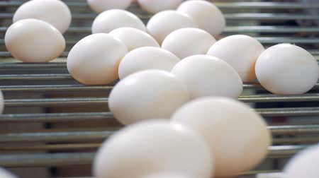 egg sorting : Fresh eggs at a poultry farm. Eggs going on a conveyor at a farming facility. Stock Footage