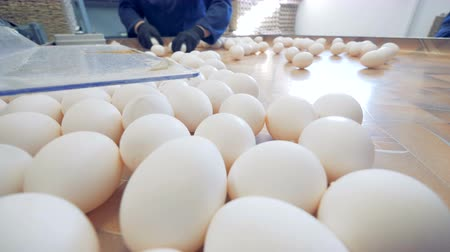 egg sorting : White eggs on a sorting table at a poultry farm, close up. Stock Footage