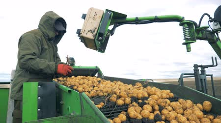 collected : Male worker is removing garbage from the conveyor belt with potatoes. Harvesting concept. Stock Footage