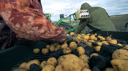 dividindo : Garbage is getting removed from potatoes on the belt by two workers. Harvesting concept. Stock Footage