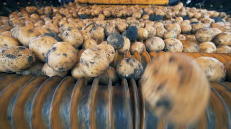 hlíza : Potatoes are rolling down inside of an industrial machine. Agriculture farming concept.