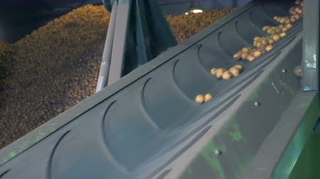 ve slupce : Factory equipment moving potatoes. Special conveyor moves potatoes at a warehouse.