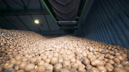 hlíza : A warehouse full of potatoes. Lots of vegetables stored in one warehouse.