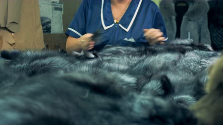mink : Factory worker brushes animal fur on a table, close up.