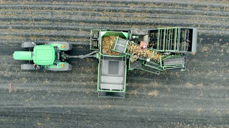 faucheuse : Harvesting process of potatoes held by several workers and a tractor in a top view