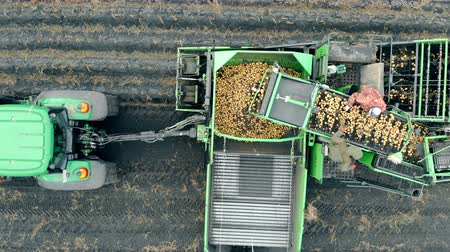reaper : Aerial view of combine harvester. Agriculture workers working gathering crop of potatoes.