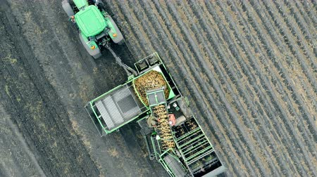 reaper : Harvesting machinery complex is riding a potato field in a view from above