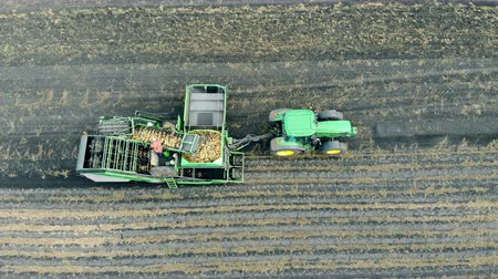 two rows : People working with potatoes on a tractor conveyor. Agriculture machinery, aerial view.