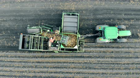 сортировать : Agriculture machinery, aerial view. People working with potatoes on a tractors trailer. Стоковые видеозаписи