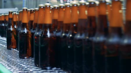 functioning : Close up of brown glassy bottles filled with beer moving along the transporter belt