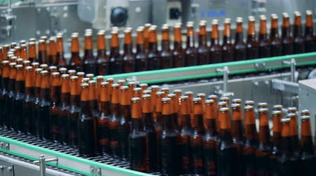 пивоваренный завод : Filled bottles on a brewery conveyor, close up.