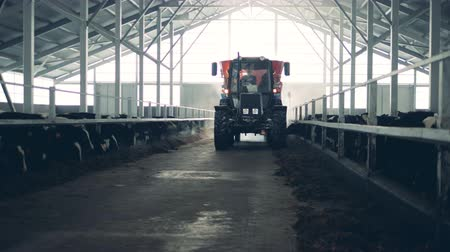 навес : A man drives a tractor in a cowshed, close up.