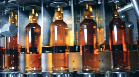 distillation : Factory conveyor transporting fresh beer bottles
