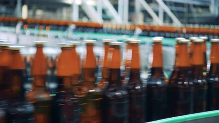 ale : Fast flow of beer bottles along the factory belt Stock Footage