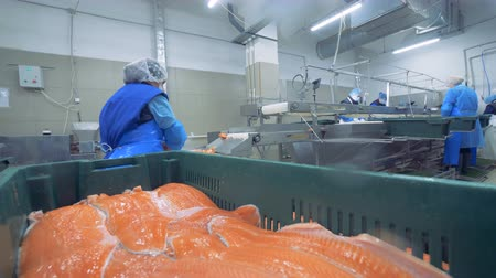 truta : Female specialist is putting fillets of salmon into the container