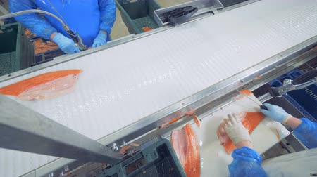кусок : Pieces of fish are moving along the conveyor and getting cut in process