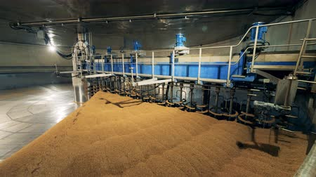 microbrewery : A warehouse with grain and equipment. Treatment of malt at a brewery. Stock Footage
