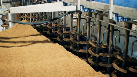 pivovar : Grains milled at a factory, close up. Malt processing equipment at malt plant, brewery.
