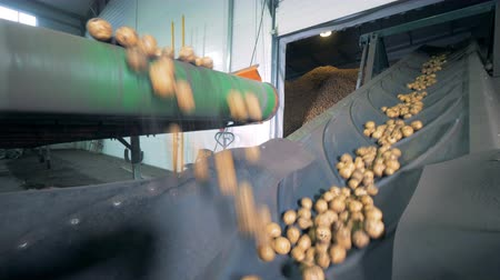 ve slupce : Piles of potatoes on a factory conveyor, close up.